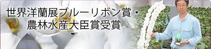 世界洋蘭展ブルーリボン賞・ 農林水産大臣賞受賞