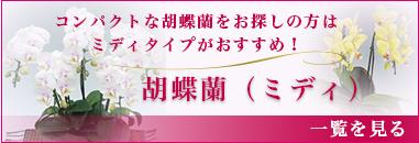 コンパクトな胡蝶蘭をお探しの方はミディタイプがおすすめ!