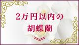 2万円以内の胡蝶蘭