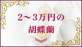 2~3万円の胡蝶蘭