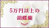 5万円以上の胡蝶蘭