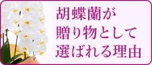 胡蝶蘭が贈り物として喜ばれる理由