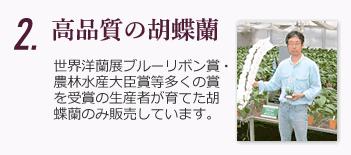 高品質の胡蝶蘭