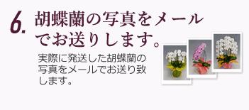 胡蝶蘭の写真をメールでお送りします。