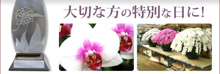 大切な方の特別な日に高品質な胡蝶蘭を