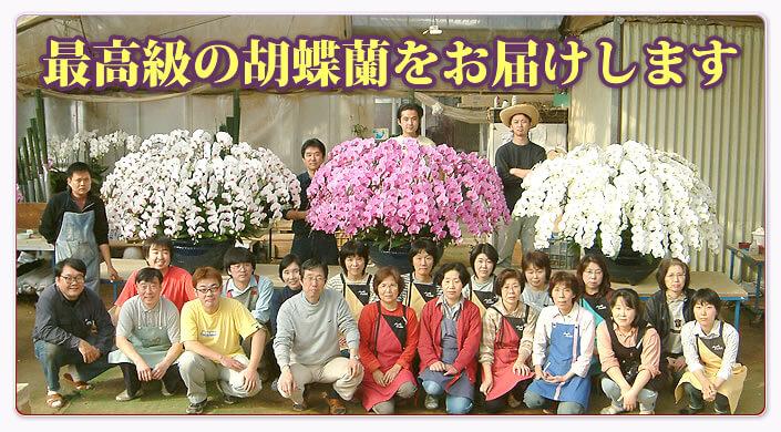 最高級の胡蝶蘭をお届けします