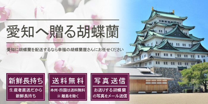 愛知県へ胡蝶蘭を配送