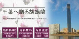 千葉県へ胡蝶蘭を配送