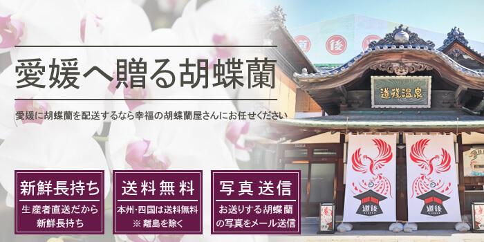愛媛県へ胡蝶蘭を配送