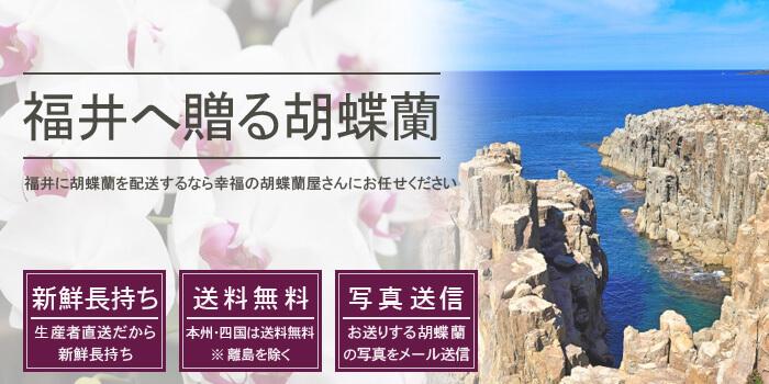 福井県へ胡蝶蘭を配送