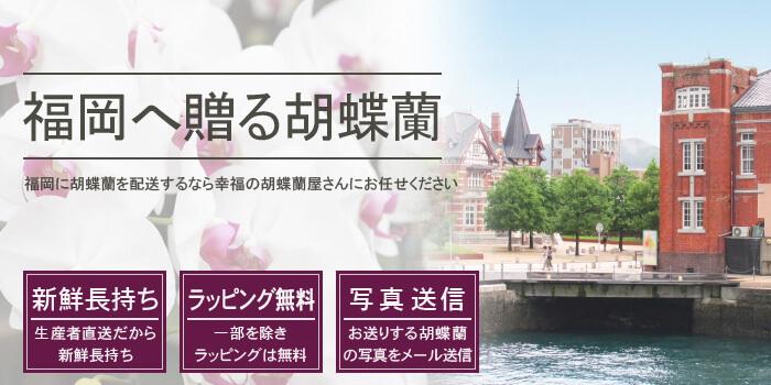 福岡県へ胡蝶蘭を配送