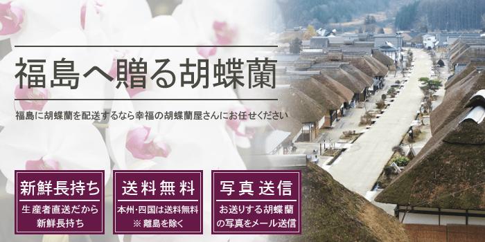 福島県へ胡蝶蘭を贈る
