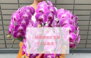 胡蝶蘭の花言葉はどんな意味