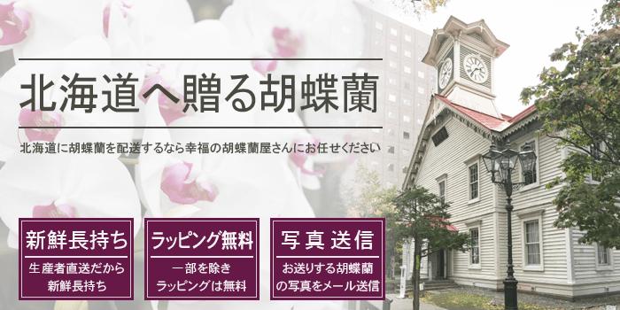 北海道へ胡蝶蘭を贈る