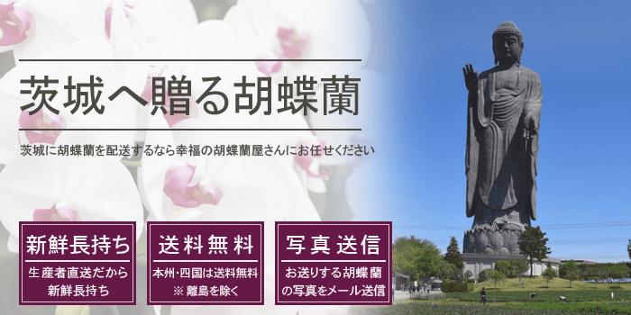 茨城県へ胡蝶蘭を配送