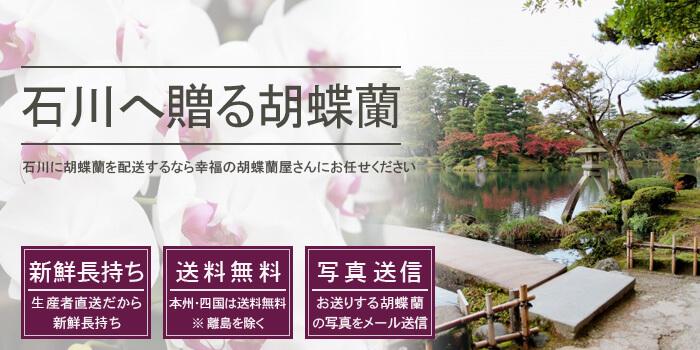 石川県へ胡蝶蘭を配送