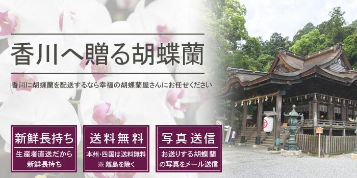香川県に胡蝶蘭を配送