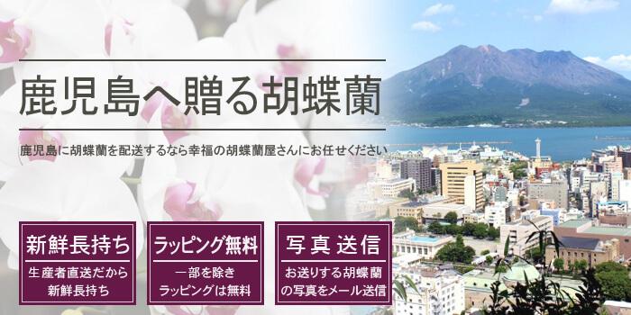 鹿児島県へ胡蝶蘭を配送する
