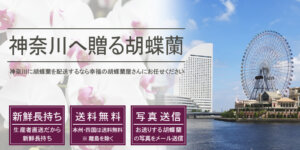 神奈川県へ胡蝶蘭を配送