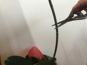 花芽を切る