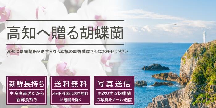 高知県へ胡蝶蘭を配送
