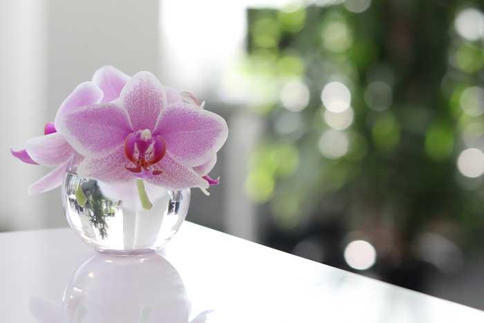 花が落ちた胡蝶蘭