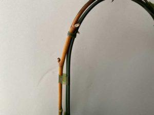 胡蝶蘭の茎が茶色い写真