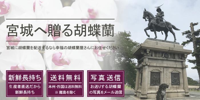 仙台などの宮城県へ胡蝶蘭を配送