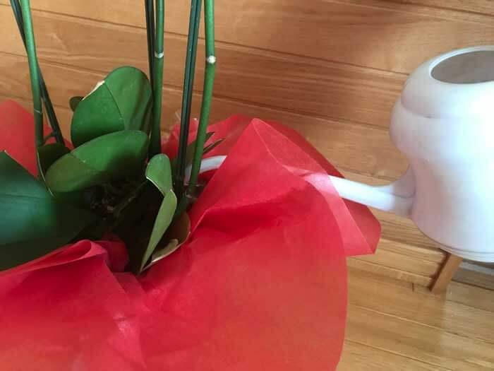 花が終わってからの水やり
