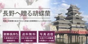 長野県へ胡蝶蘭を配送するなら