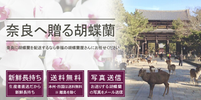 奈良県へ胡蝶蘭を配送