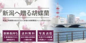 新潟県へ胡蝶蘭を配送する