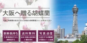 大阪に胡蝶蘭を贈る