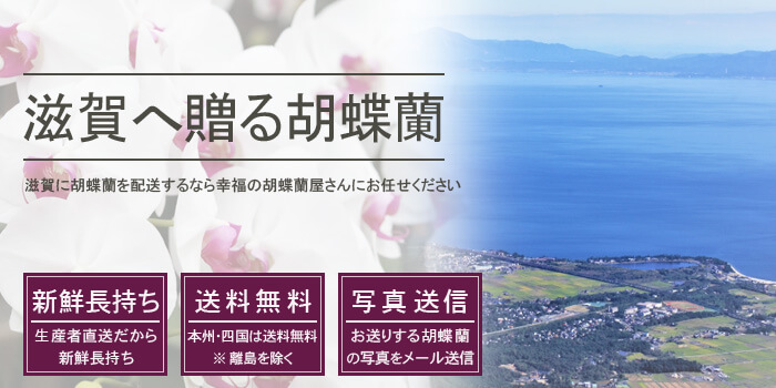 滋賀県へ胡蝶蘭を配送