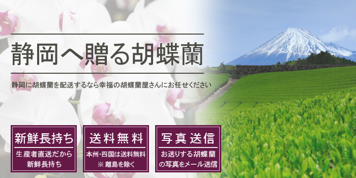 静岡県へ胡蝶蘭を配送