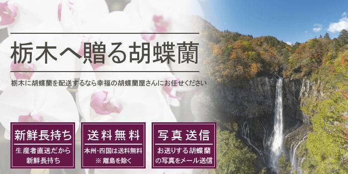 栃木県へ胡蝶蘭を配送するなら幸福の胡蝶蘭屋さん