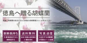 徳島県へ胡蝶蘭を配送する