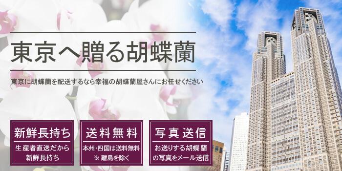 東京都に胡蝶蘭を配送