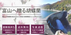 富山県へ胡蝶蘭を配送
