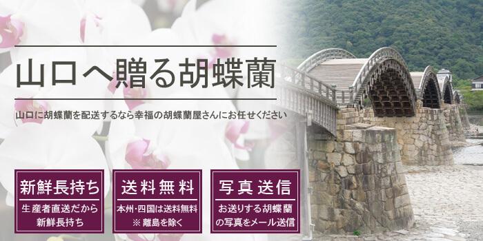 山口県へ胡蝶蘭を配送